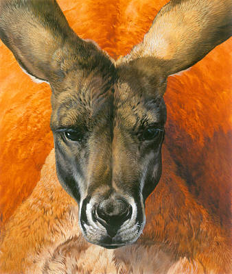 Kangaroo Painting - Kangaroo Portriat by John Francis