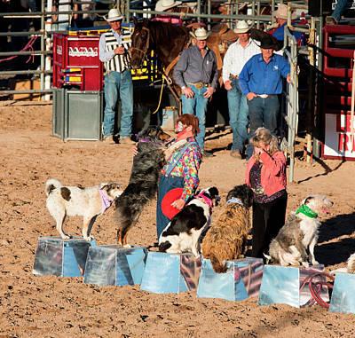 Senior Dog Photograph - Usa, Arizona, Buckeye, Hellzapoppin by Jaynes Gallery
