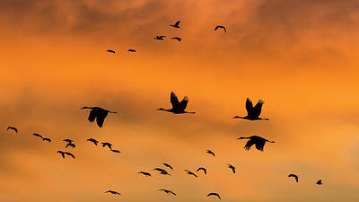 Usa, New Mexico, Bosque Del Apache Art Print by Jaynes Gallery