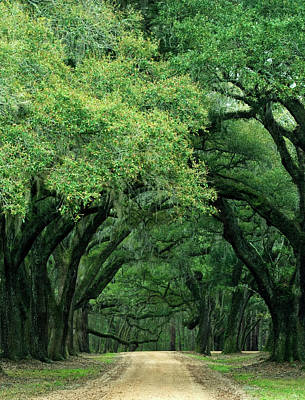 Overhang Photograph - Usa, South Carolina, Charleston by Jaynes Gallery