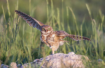 Burrowing Owl Photograph - Usa, Wyoming, Sublette County by Elizabeth Boehm