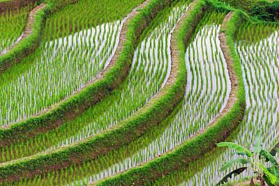 Water-filled Rice Terraces, Bali Art Print by Keren Su