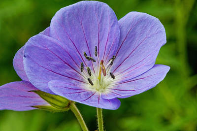 Photograph - Wildflowers by Peter Lakomy