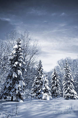Photograph - Winter Forest by Elena Elisseeva