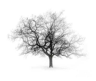 Landscapes Royalty-Free and Rights-Managed Images - Lone winter tree in fog by Elena Elisseeva
