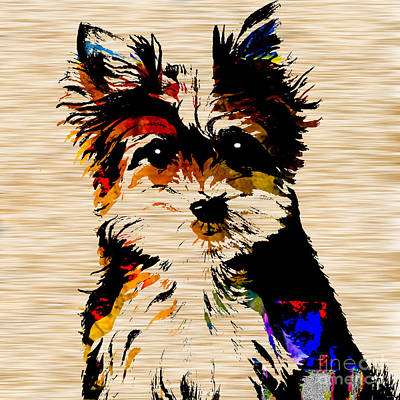 Yorkshire Terrier Puppy Mixed Media - Yorkshire Terrier by Marvin Blaine