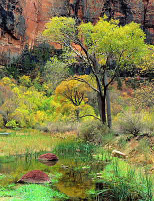 Golden Marsh Photograph - Zion National Park, Utah by Scott T. Smith