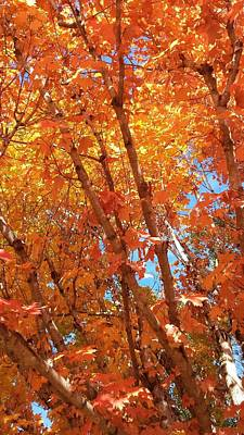 Photograph - Fall Explosion Of Color by Kenny Glover