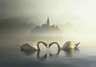 Swan Wall Art - Photograph - Untitled by Veselin Atanasov