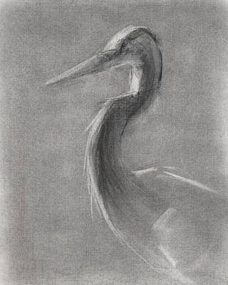 Herons Drawing - Rcnpaintings.com by Chris N Rohrbach