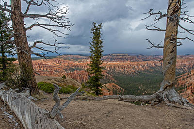 Photograph - Bryce Canyon National Park by Willie Harper