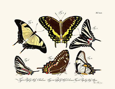 Butterflies Art Print by Splendid Art Prints