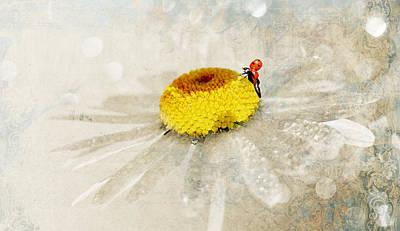 Ladybug Mixed Media - Ladybug by Heike Hultsch