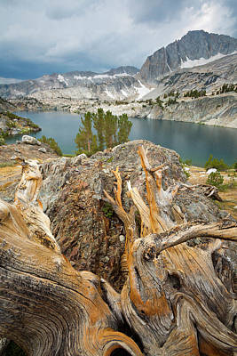 Stormy Tree Photograph - Usa, California, Inyo National Forest by Jaynes Gallery