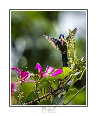 Photograph - 4117b by Carlos Mac