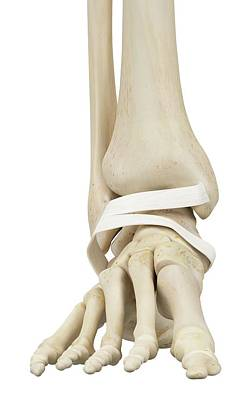 Human Foot Anatomy Art Print by Sciepro