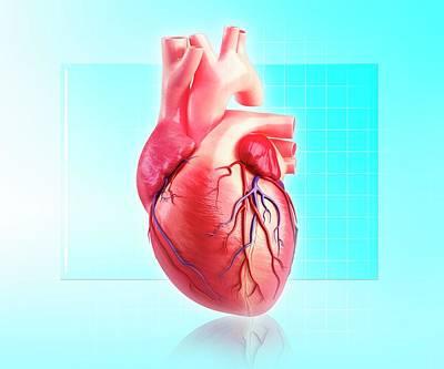 Human Heart Art Print by Pixologicstudio/science Photo Library