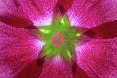 Hollyhock Photograph - Usa, Washington State, Seabeck by Jaynes Gallery