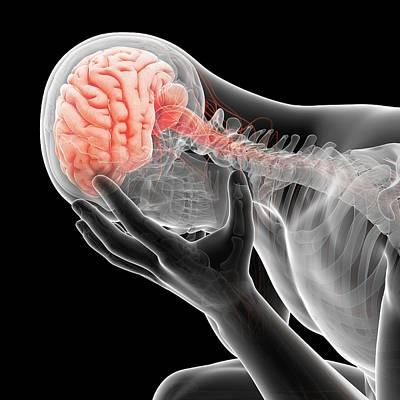 Mental Photograph - Human Brain by Sebastian Kaulitzki