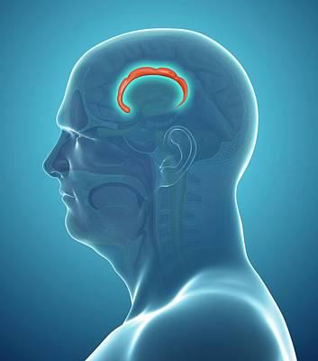 Brain Anatomy Art Print by Pixologicstudio/science Photo Library