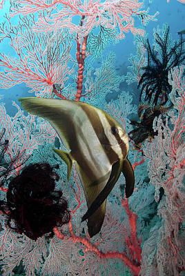 Indonesia, Papua, Raja Ampat Art Print by Jaynes Gallery