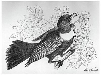 Berry Drawing - Blackburn Birds, 1895 by Granger