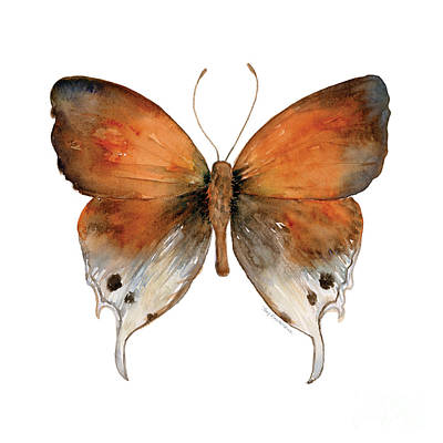 Animals Paintings - 47 Mantoides Gama Butterfly by Amy Kirkpatrick