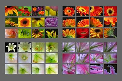 Photograph - 48 Beautiful And Inspiring Flower Photographs by Juergen Roth