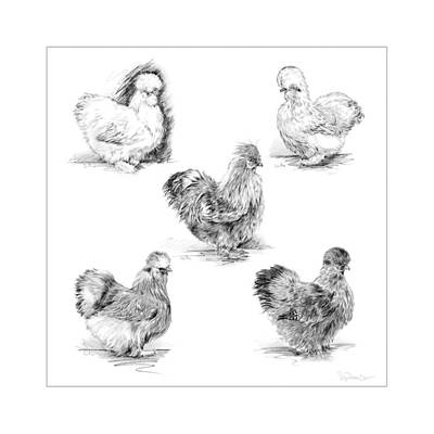 48. Silkies Pencil Drawing Art Print