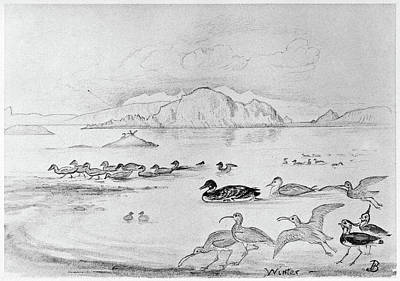 Lapwing Drawing - Blackburn Birds, 1895 by Granger