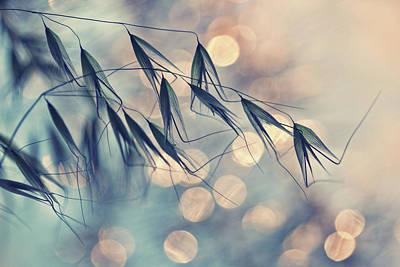 Zen Harmony Photograph - ...<<< by Dimitar Lazarov -