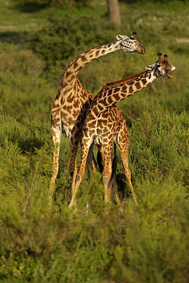Mcdonalds Photograph - Africa, Tanzania, Serengeti National by Joe and Mary Ann Mcdonald
