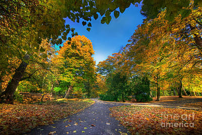 Woods Photograph - Alley With Falling Leaves In Fall Park by Michal Bednarek