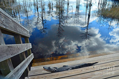 Photograph - 5- Alligator by Joseph Keane