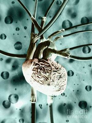 Photograph - Artificial Heart, Conceptual Artwork by Equinox Graphics