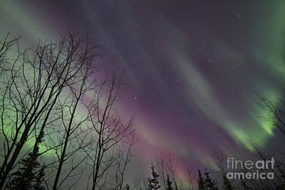 Photograph - Aurora Borealis With Trees, Whitehorse by Joseph Bradley