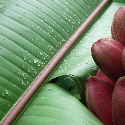 Banana Leaf Art Print by Heiko Koehrer-Wagner