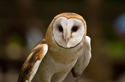 Negative Space - Barn Owl by Owl Images