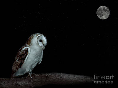 Owl Photograph - Barn Owl by Shaun Wilkinson