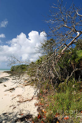Royal Photograph - Beach At Coco Cay by Amy Cicconi