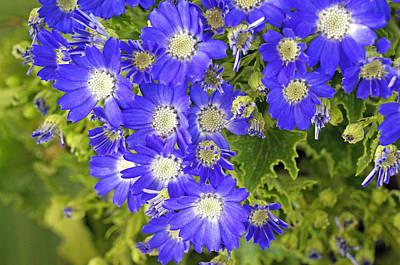 Plants Photograph - Beautiful Flower by Nelson Peng