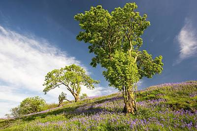 Ash Photograph - Bluebells Growing On A Limestone Hill by Ashley Cooper