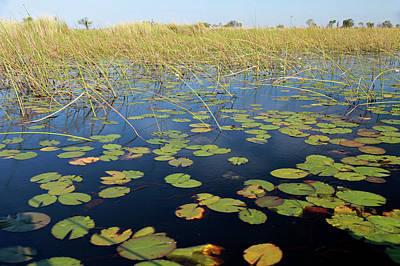 Lilly Pads Photograph - Botswana, Okavango Delta by Kymri Wilt