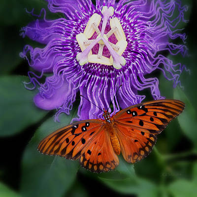 Photograph - Butterfly Garden by Joseph G Holland