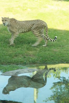 Cheetah Art Print by Tinjoe Mbugus
