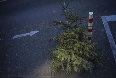 Christmas Tree Unadorned On The Street Art Print