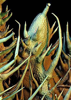 Cucumber Leaf Trichomes Art Print by Stefan Diller