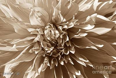 Photograph - Dahlia Named Sheila Young by J McCombie