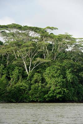 Amazon River Photograph - Ecuador, Orellana, Napo River by Kevin Oke