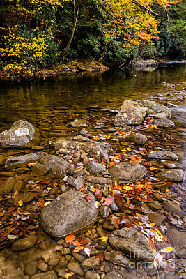 Fall Color Gauley River Art Print